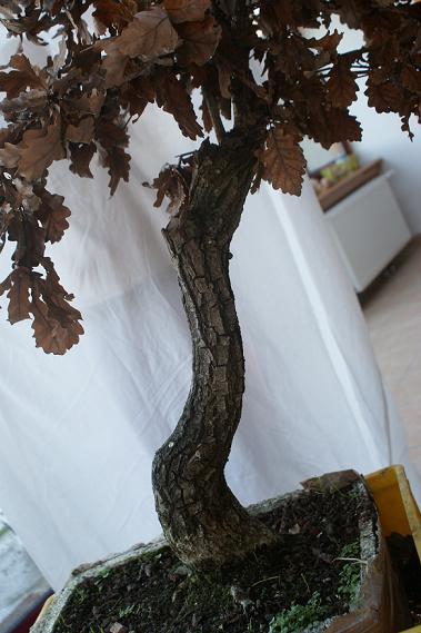 http://espritsdegoshin.fr/components/com_agora/img/members/2011/tronc-chêne.JPG