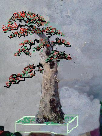 http://espritsdegoshin.fr/components/com_agora/img/members/2074/mini_bouginavillier-virt.jpg